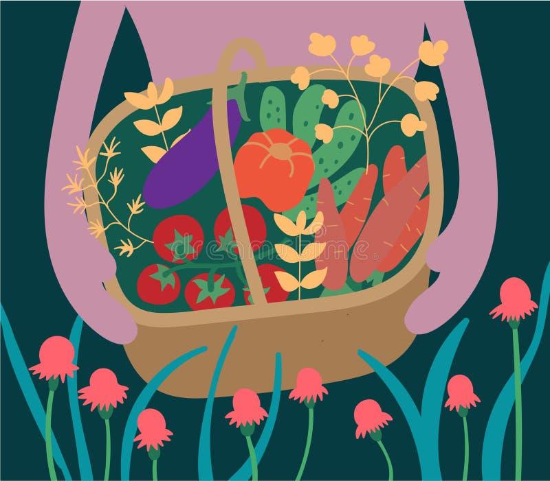 Jarzynowy żniwo w drewnianym koszu Ogórki, marchewki, oberżyna, pomidory, pieprze, herbarium Ogrodnictwo i horticulture ziemia ilustracji