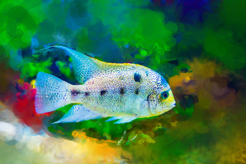 Jaskrawa barwiona tropikalna ryba na algi tle ilustracja wektor