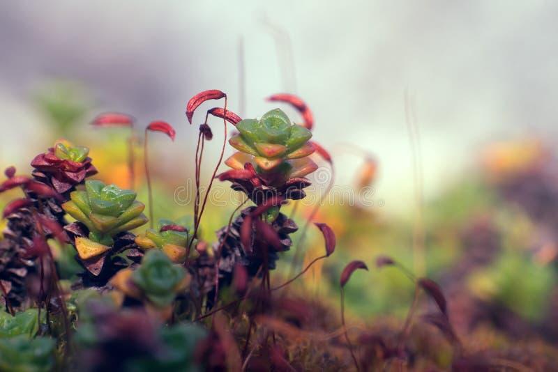 jaskrawa i różnorodna flora zdjęcie royalty free