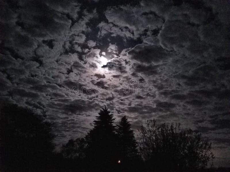 Jaskrawa księżyc z ciemnymi drzewami obraz stock