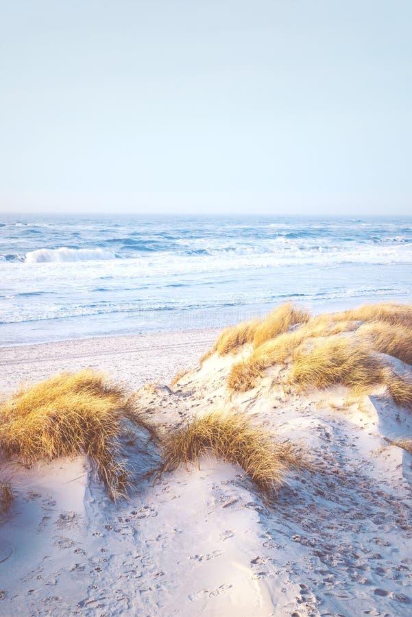 Jaskrawa plaża przy duńskim wybrzeżem obraz royalty free