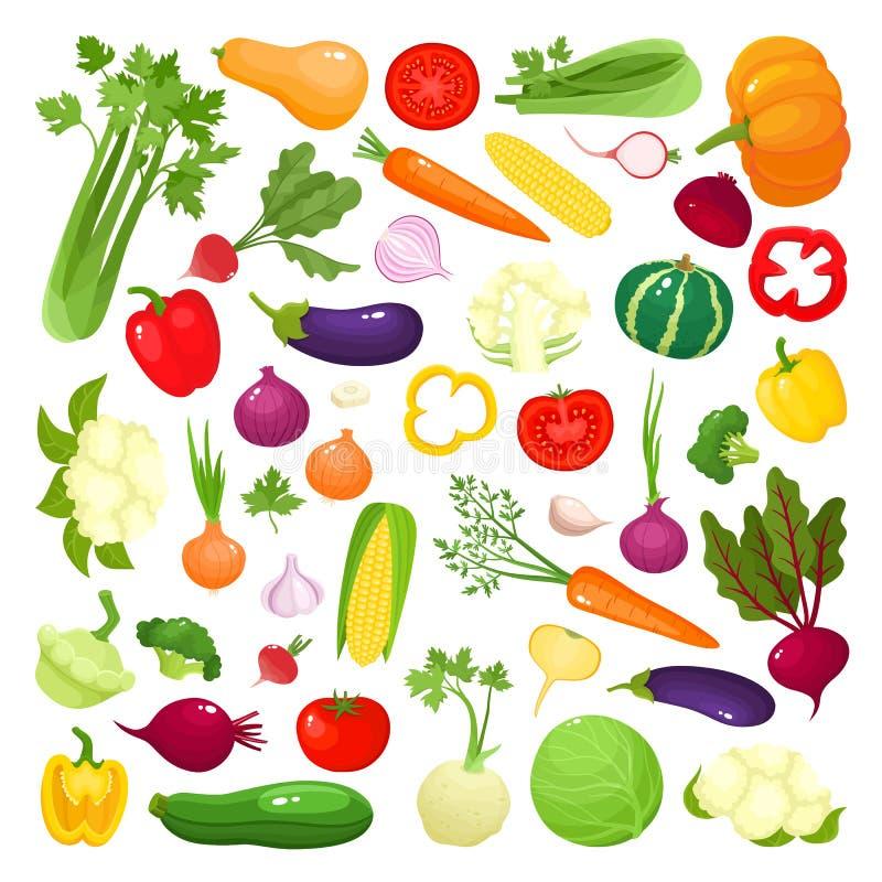 Jaskrawa wektorowa ilustracja kolorowi warzywa odizolowywający na białym tle ilustracji