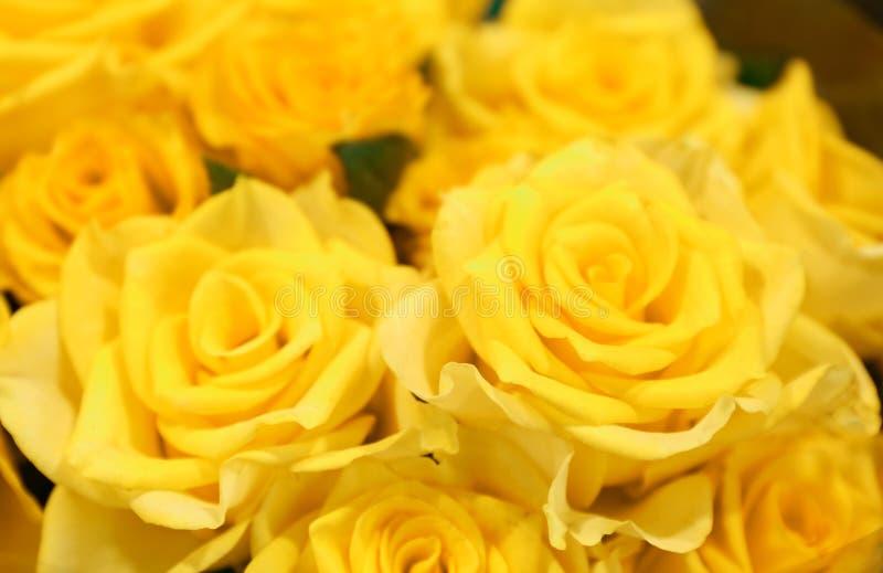 Jaskrawe żółte róże, zbliżenie zdjęcie stock