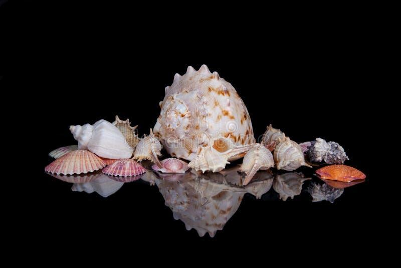 Jaskrawe kolorowe morze skorupy grupować przez ciemnego tło zdjęcia royalty free