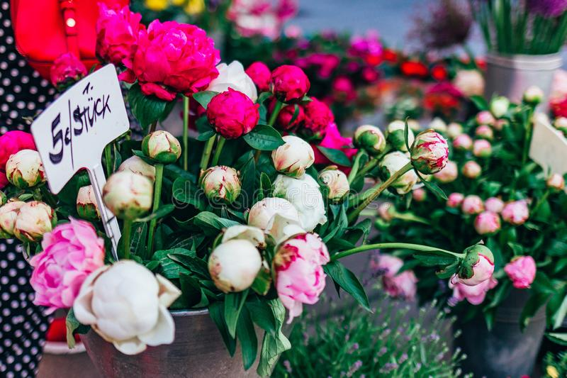 Jaskrawe peonie w wiadrze sprzedają na kwiatu rynku zdjęcie royalty free
