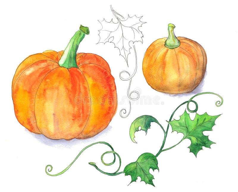 Jaskrawe pomarańczowe banie zdjęcie royalty free