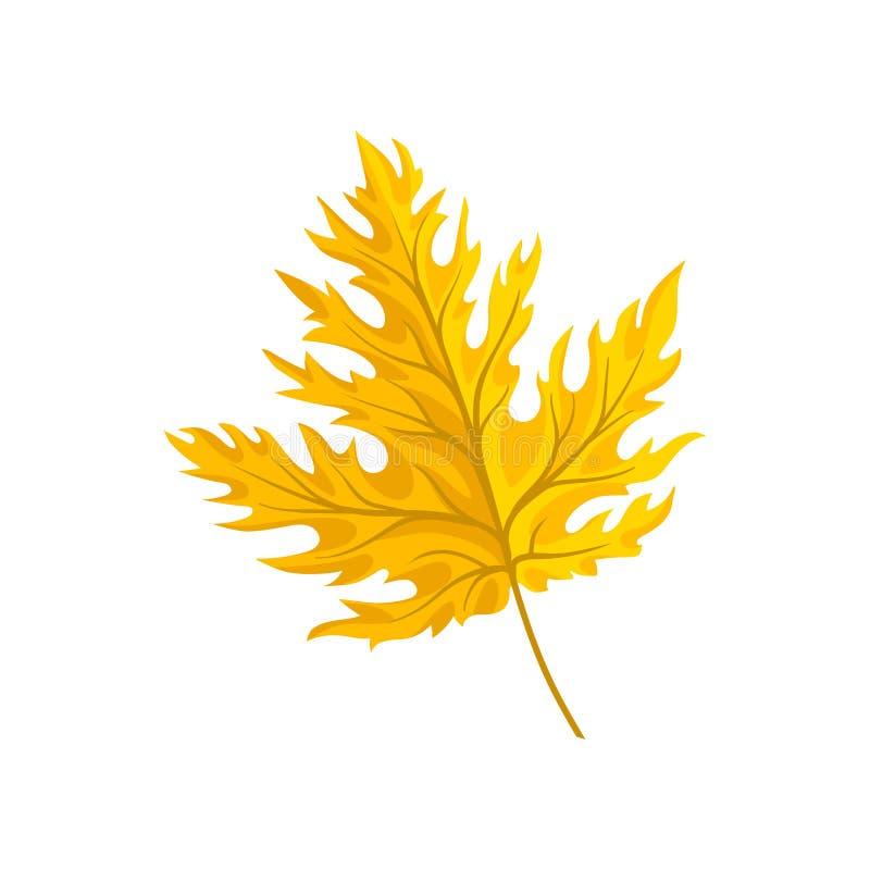 Jaskrawego żółtego jesień liścia klonowego wektorowa ilustracja na białym tle ilustracji