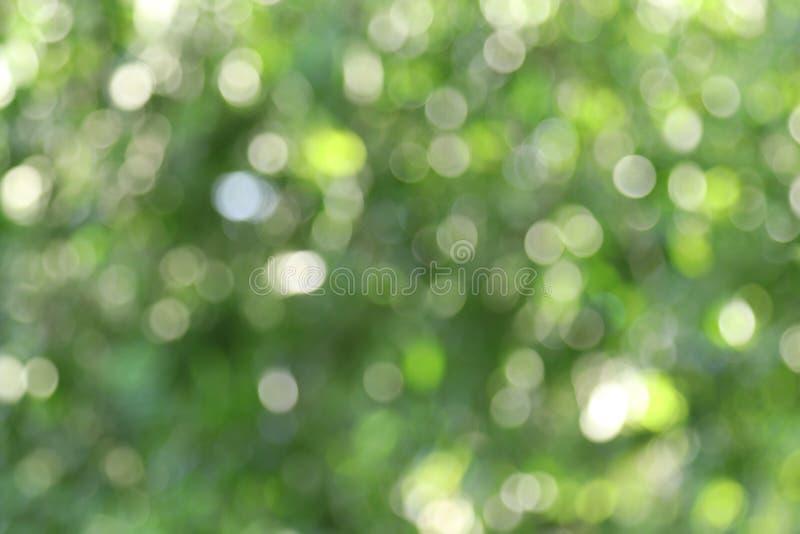 Jaskrawego bokeh drzewny tło, Zielony abstrakt zamazywał lekkiego środowiska naturalnego tło obraz royalty free