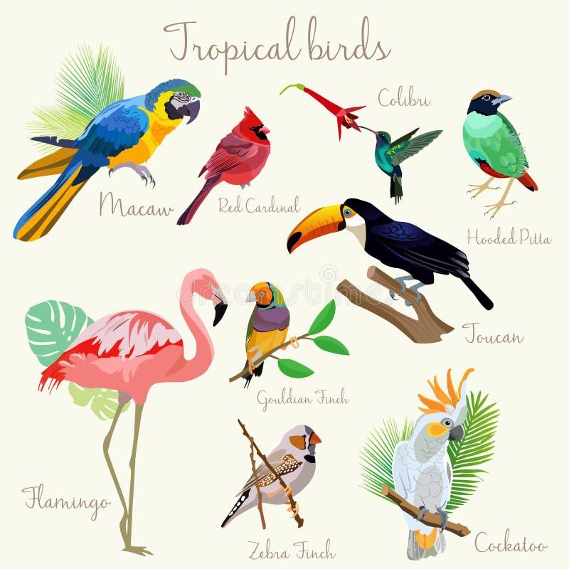 Jaskrawego koloru Egzotyczni tropikalni ptaki ustawiający royalty ilustracja