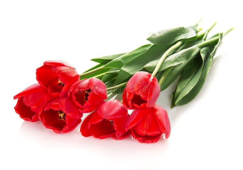 Download Jaskrawi czerwoni tulipany zdjęcie stock. Obraz złożonej z bukiet - 41951726