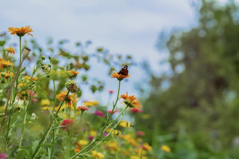 Jaskrawi kolory lato Stubarwni kwiaty i motyl przeciw niebu Naturalny tło fotografia royalty free