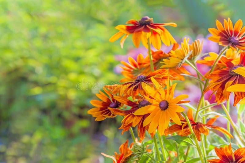 Jaskrawi kwiaty w kraju zdjęcie stock