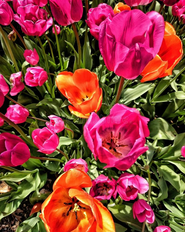 Jaskrawi uroczy kwiaty obrazy royalty free