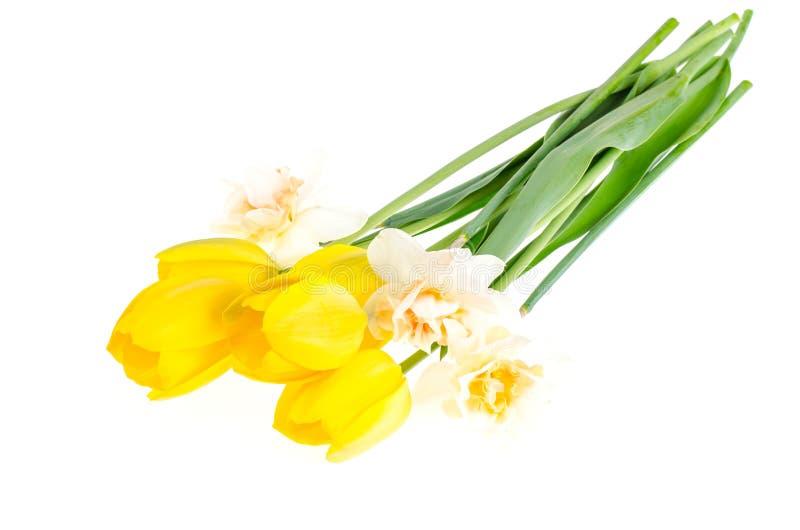 Jaskrawi wiosna kwiaty odizolowywający na białym tle fotografia stock