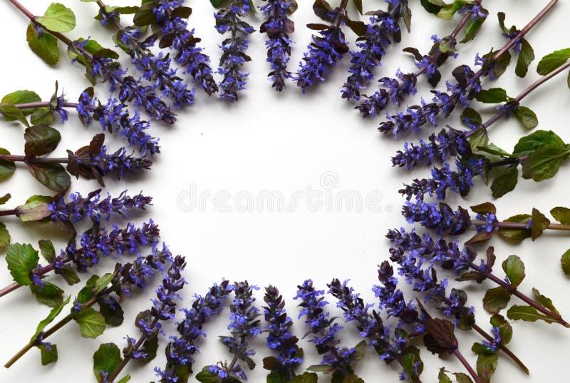 Jaskrawi wiosny i lata kwiaty na białym tle zdjęcia royalty free
