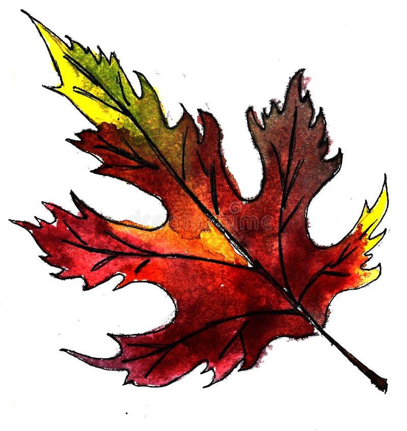 Jaskrawy żółty Burgundy akwareli jesieni liść klonowy odizolowywający nad białym tłem ilustracji