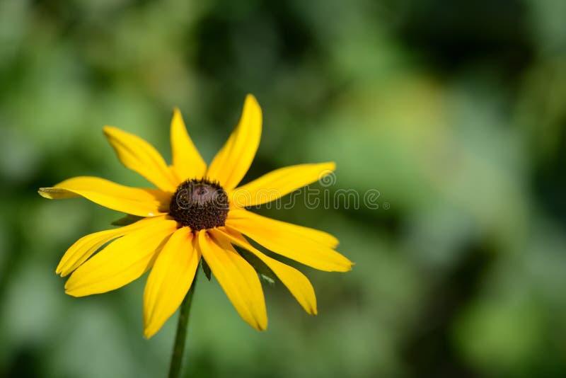 Jaskrawy żółty kwiat w ogródzie fotografia royalty free