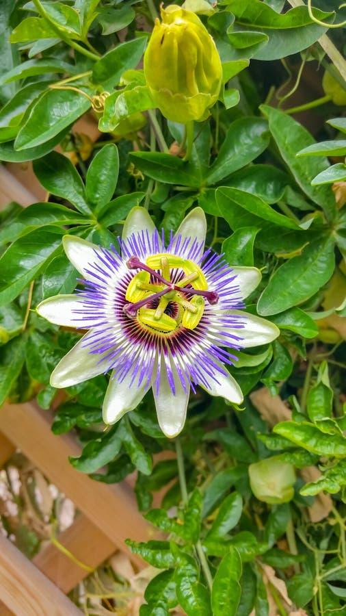 Jaskrawy barwiący kwiat na tle zielony ulistnienie fotografia stock