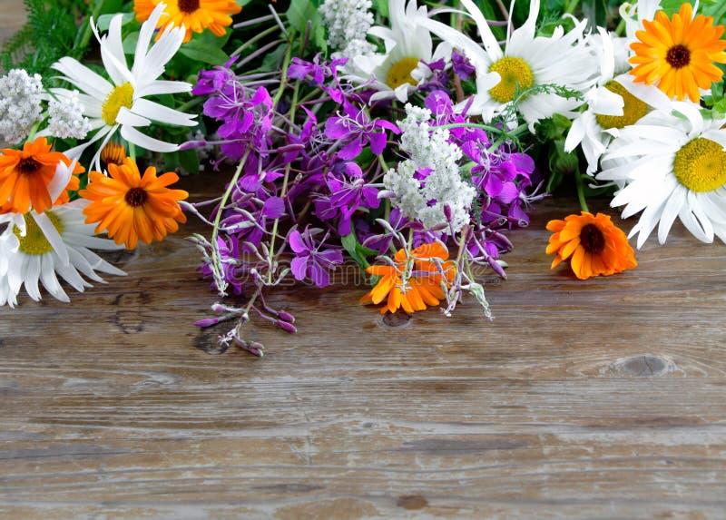 Jaskrawy bukiet śródpolni świezi kwiaty zdjęcia royalty free
