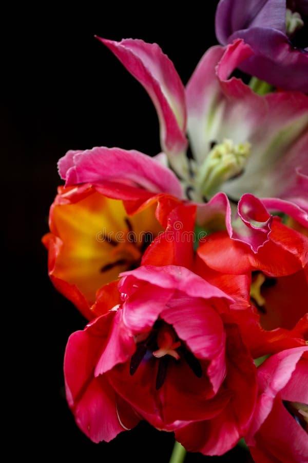 Jaskrawy colour kwiaty obraz stock