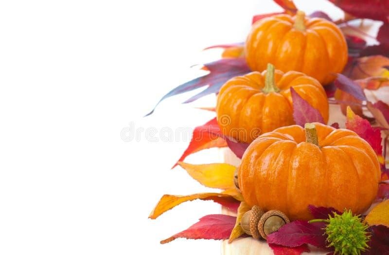 Jaskrawy i Kolorowy dziękczynienie lub Halloween, Spadamy Mini banie w rzędzie z spadków liśćmi na Białym tle lub linii obraz royalty free