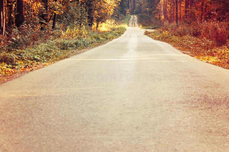 Jaskrawy jesień krajobraz Jesieni drzewa wzdłuż lasowej drogi tonowanie zdjęcie stock
