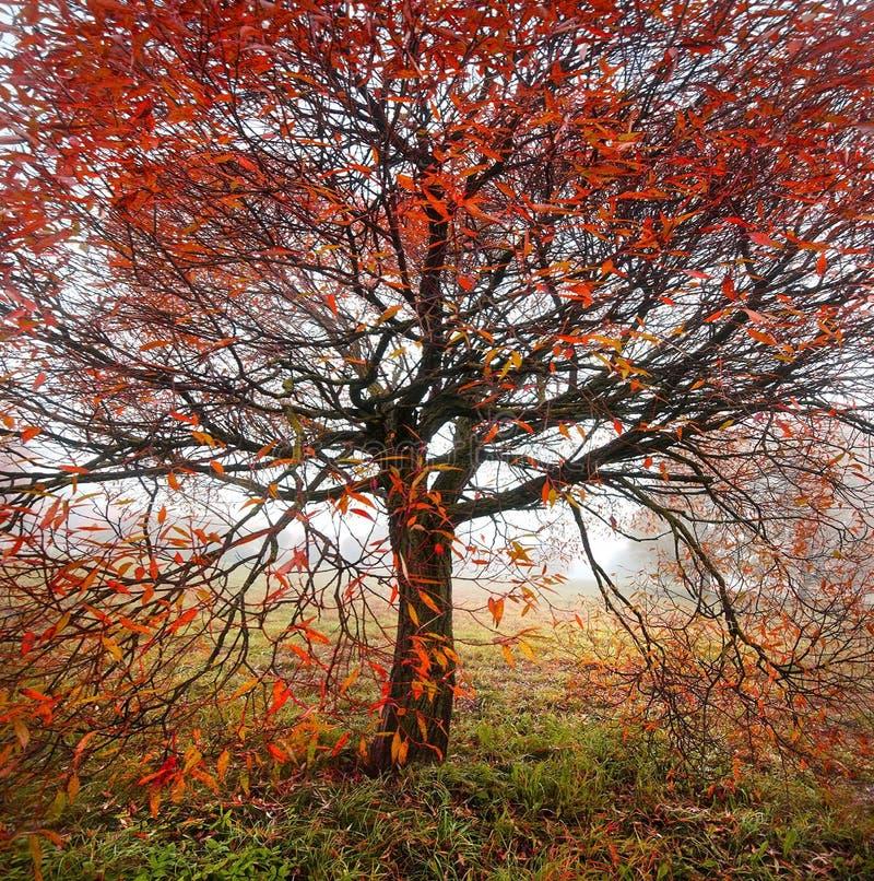Jaskrawy jesieni drzewo fotografia stock