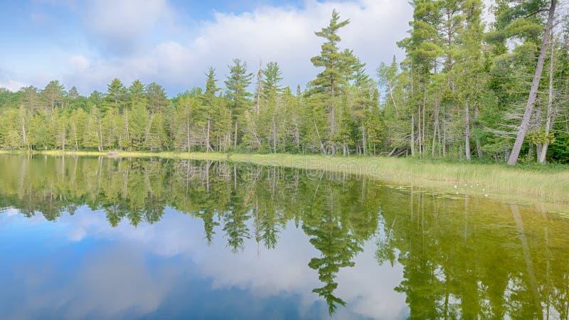 Jaskrawy jezioro, Hartwick sosen stanu park, MI zdjęcia stock