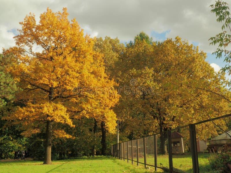 Jaskrawy kolor żółty jest głównym kolorem jesień zdjęcie stock
