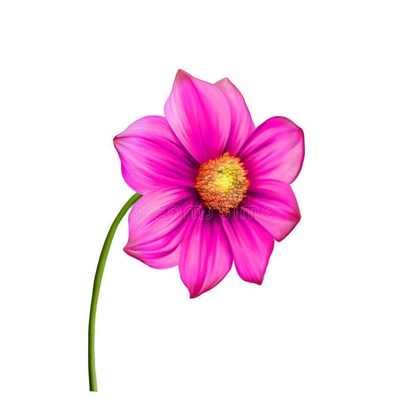 Jaskrawy kolorowy dalia kwiat, wiosna kwiat obrazy stock