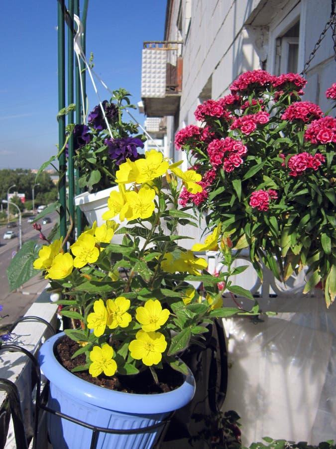 Jaskrawy mały ogród na miastowym balkonie piękne kolor kwiatów zdjęcia stock