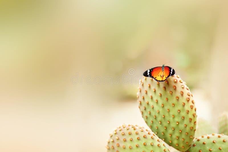 Jaskrawy motyl na kaktusie fotografia royalty free