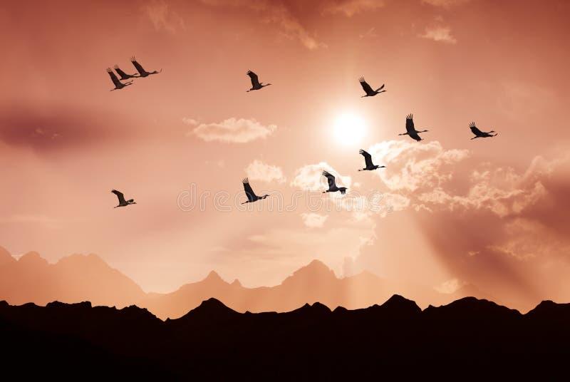Jaskrawy niebo na zmierzchu lub wschodzie słońca z latających ptaków naturalnym backgr obraz royalty free