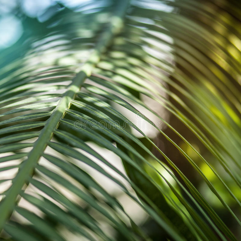 Jaskrawy palmowego liścia zakończenie up obraz stock