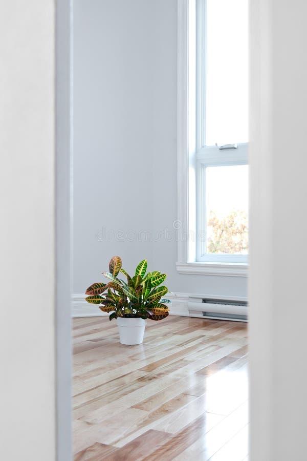 Jaskrawy pokój widzieć przez drzwi obraz royalty free