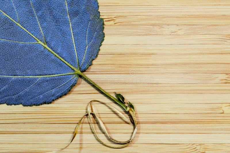 Jaskrawy pomarańczowy liść na drewnianej powierzchni zdjęcie royalty free
