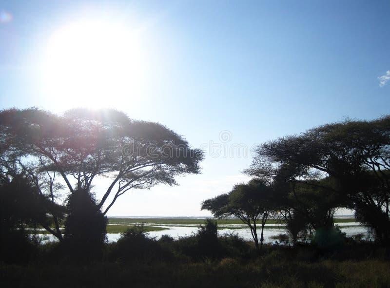 JASKRAWY słońce NAD SZEROKĄ CHOBE rzeką Z drzewami zdjęcie stock