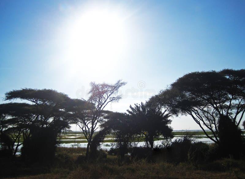 JASKRAWY słońce W niebie NAD SZEROKĄ CHOBE rzeką obrazy royalty free