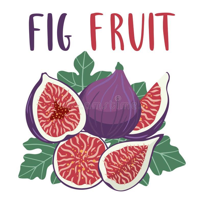 Jaskrawy set kolorowa połówka, plasterek i cały soczysta figi owoc, royalty ilustracja