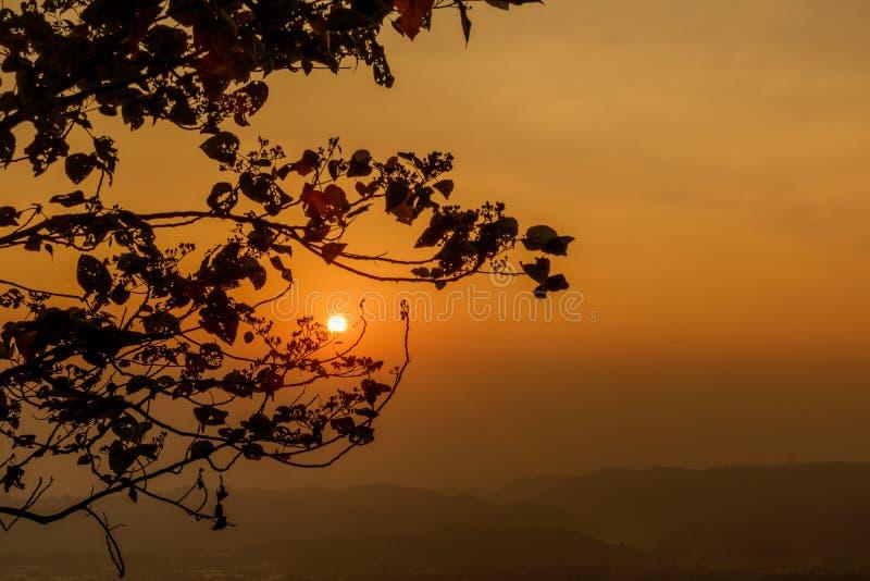 Jaskrawy sfera kwiat przy wschodem słońca zdjęcie stock