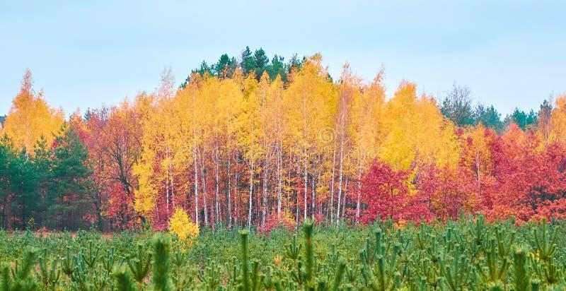 Download Jaskrawy spadek barwi tło obraz stock. Obraz złożonej z plenerowy - 106908487