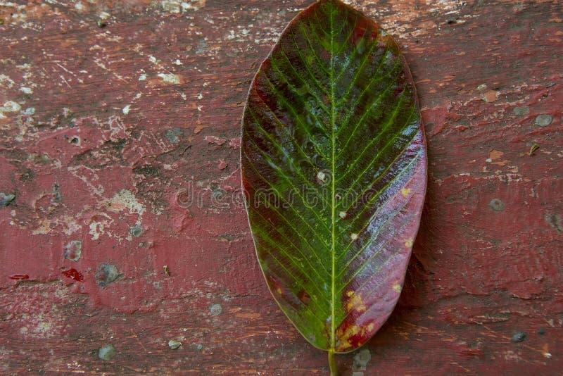 Jaskrawy stubarwny liść drzewo na Krakingowym Grunge backgroun zdjęcia royalty free