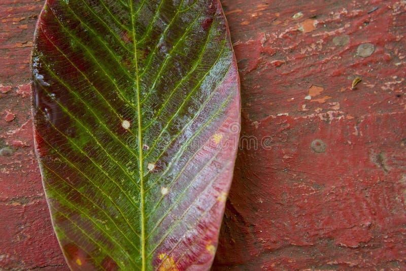 Jaskrawy stubarwny liść drzewo na Krakingowym Grunge backgroun fotografia royalty free