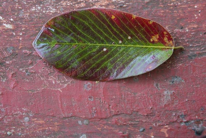 Jaskrawy stubarwny liść drzewo na Krakingowym Grunge backgroun fotografia stock