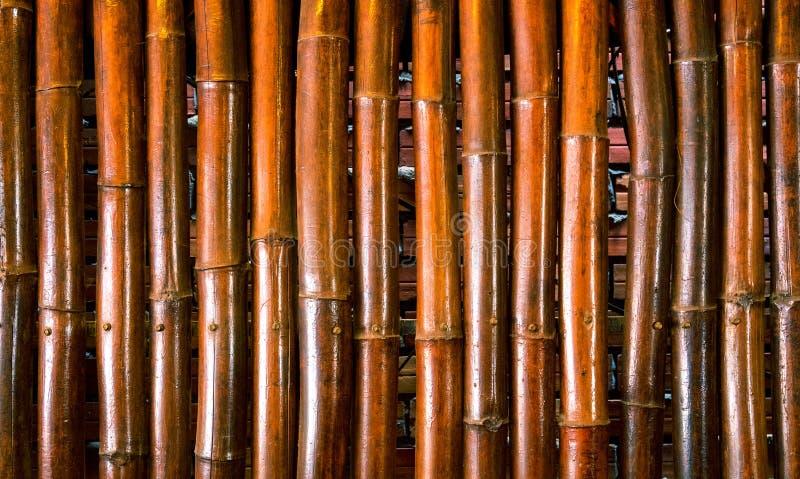 jaskrawy tło bambus Bambusowa bagażnik fotografia Nieociosany drewniany ekran Brown bambusowa dekoracyjna ściana obrazy royalty free