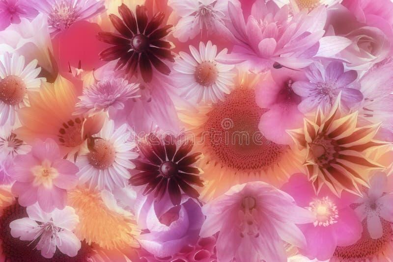 jaskrawy tło kwiaty ilustracji