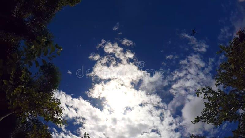 Jaskrawy, tropikalny niebo w ramie truteń, obrazy royalty free
