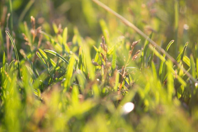 Jaskrawy wibrujący zielonej trawy zakończenie fotografia royalty free
