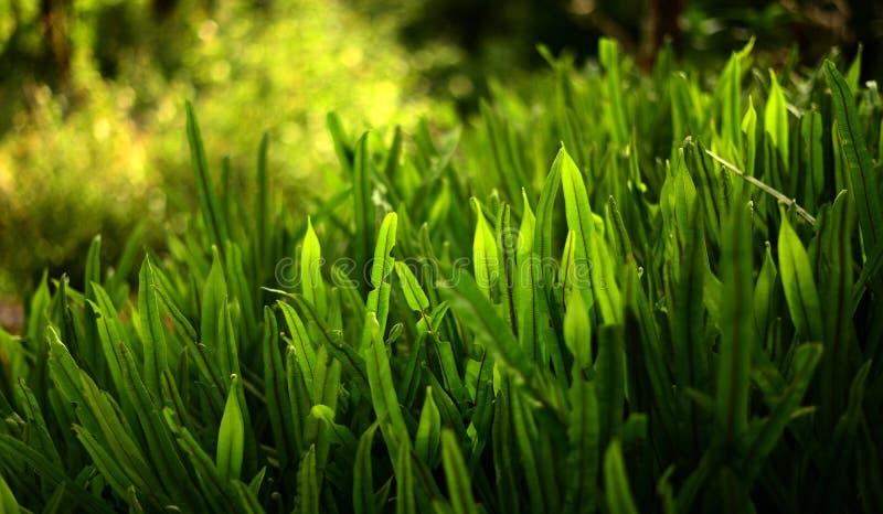 Jaskrawy wibrujący zielonej trawy zakończenie zdjęcie stock