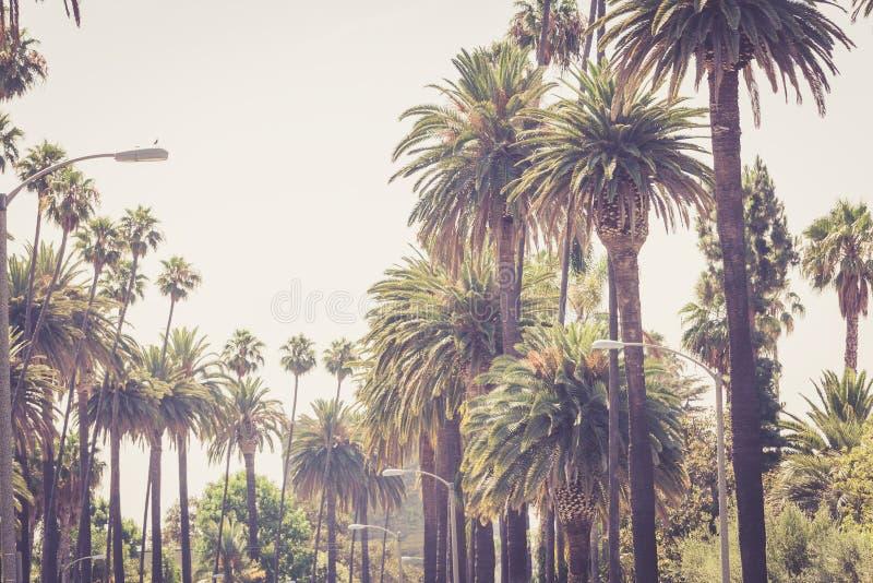 Jaskrawy zaświecać Beverly Hills palmy zdjęcia stock